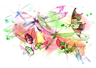 Papiers peints Peintures insects