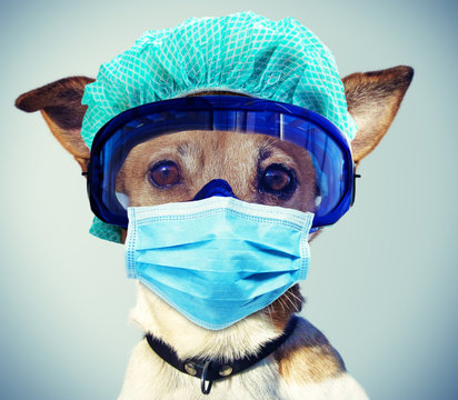 Jack Russel Dog with Face Mask