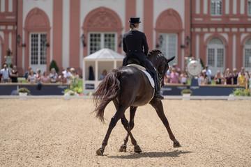 Foto auf Gartenposter Pferde Pferd Dressur Reiten