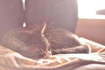낮잠자는 고양이 Wall mural