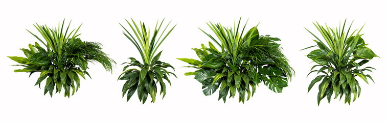 Wall Murals Plant Green leaves of tropical plants bush (Monstera, palm, rubber plant, pine, bird's nest fern) floral arrangement indoors garden nature backdrop isolated on white background thailand,clipping path inclu