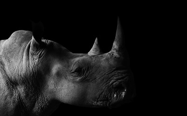 Poster de jardin Rhino Rhino with Black Background