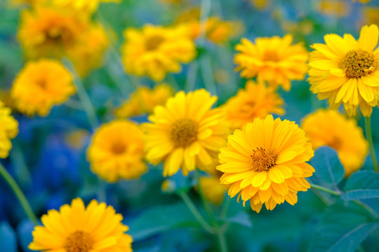 yellow flowers on a bed close-up
