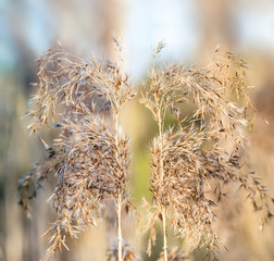 Two reeds in a blurry background