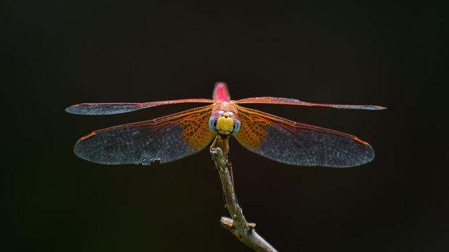 dragonfly on a green leaf