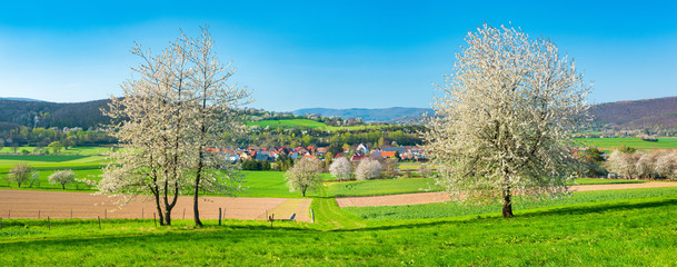 Wall Mural - Frühling in Nordhessen, Kulturlandschaft bei Bad Sooden-Allendorf, blühende Kirschbäume, Hessen, Deustchland