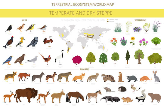 Temperate and dry steppe biome, natural region infographic. Prarie, steppe, grassland, pampas. Terrestrial ecosystem world map. Animals, birds and vegetations ecosystem design set