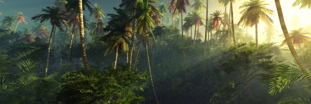 Sunrise in the jungle, palm trees in the fog in the morning, the rays of the sun in the palm trees,