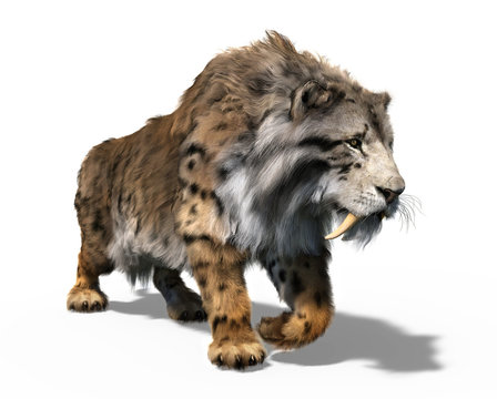 Smilodon Populator - Sabre Tooth Cat