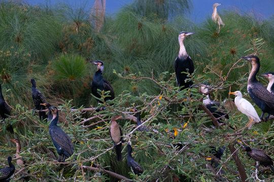 birds akagera park