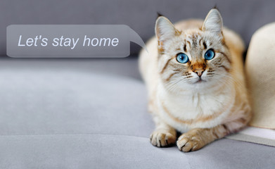 Stay at home social media campaign for coronavirus prevention. Concept with  portrait of ginger  cat