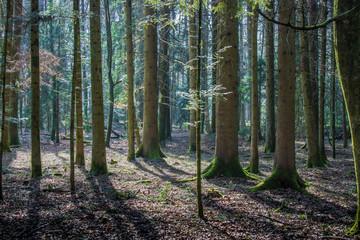 Waldlandschaft im Hotzenwald