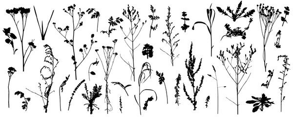 Plants, bare wild weeds, big set of silhouettes. Vector illustration. Fotomurales