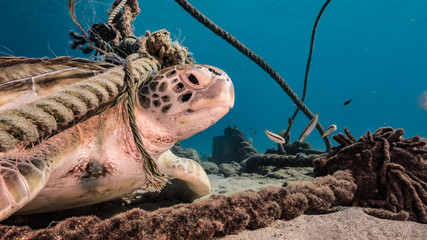 Seascape of coral reef in the Caribbean Sea around Curacao with Green Sea Turtle