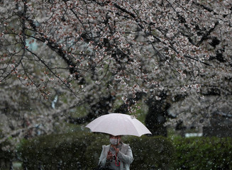 A woman wearing a protective face mask, following an outbreak of the coronavirus disease, walks under blooming cherry blossoms in a snow fall in Tokyo