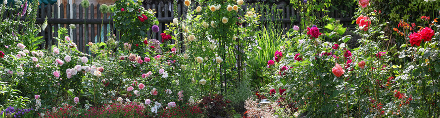 Beautiful panorama view of a cottage garden with lots of roses and other perennial plants in bright sunshine