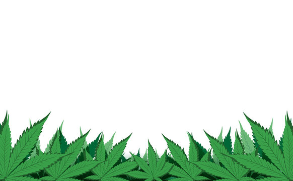 Cannabis leafs border, Green leaves isolated on white background with copy space, Flat vector illustration design,