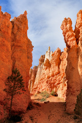 Foto op Aluminium Rood traf. Bryce Canyon National Park located in southwestern Utah.