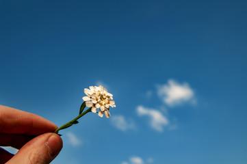 Blüte in einer Hand vor blauem Himmel