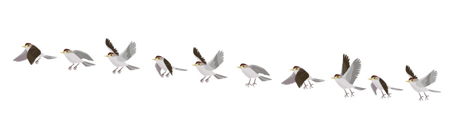 Full cycle of bird's flying. Animated sequences for animal motion design