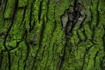 tree bark with green moss and lichen