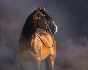 Fototapete - Spanish Horse in baroque bridle in light smoke.