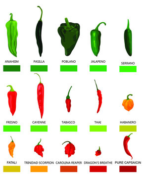 Set of hot peppers. Collection of different fruits of pepper with a sharpness on the Scoville scale. Set of vegetables for lovers of spicy taste of food. Color illustration for a store.