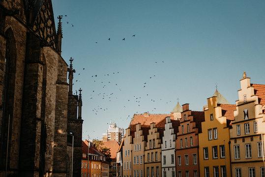 fliegende vögel vor blauen Himmel in der Stadt Osnabrück