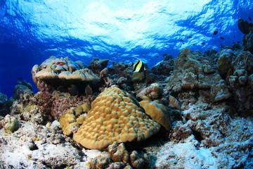 Wall Mural - Coral reef underwater in the tropical ocean