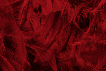 Wall Mural - Beautiful dark red maroon feather pattern texture background