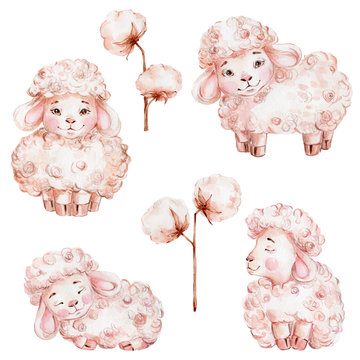 Set with cute cartoon sheep and cotton; watercolor hand draw illustration; can be used for cards or interior posters; with white isolated background