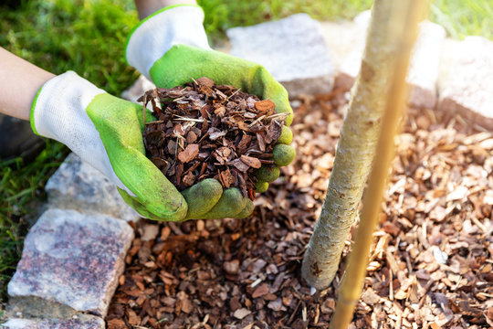 mulching flowerbed with pine tree bark mulch