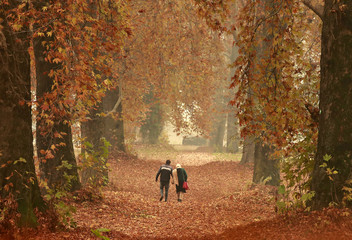 A couple walks amid fallen leaves of Chinar trees in a garden on an autumn day in Srinagar