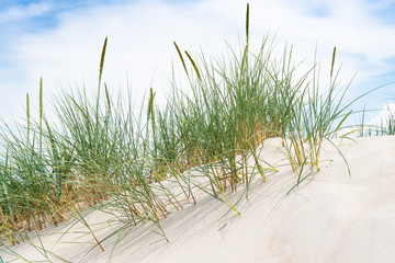 Wall Mural - Dune with beach grass in the foreground.