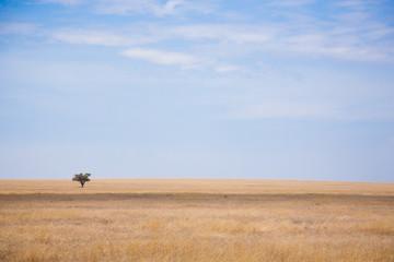 Serengeti National Park landscape, Tanzania, Africa Wall mural