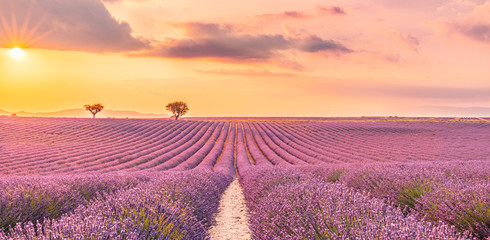 Wonderful scenery, amazing summer landscape of blooming lavender flowers, peaceful sunset view, agriculture scenic. Beautiful nature background, inspirational concept