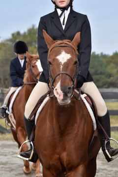 Hunter/jumper horse show