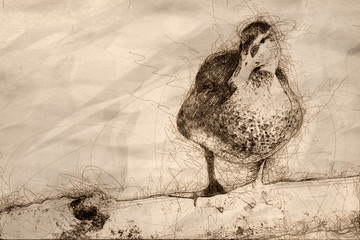 Fototapete - Sketch of a Mallard Duck Resting on the Old Weathered Log