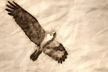 Wall Mural - Sketch of Lone Osprey Flying in a Blue Sky While Making Direct Eye Contact