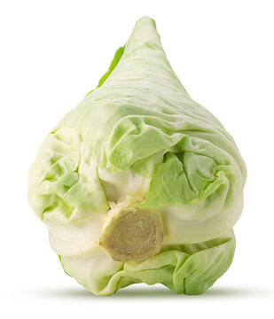 Fresh green field pointed cabbage