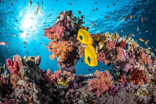 Korallenriff im Ras Mohammed Nationalpark im Roten Meer in Ägypten