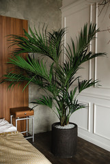 Big palm tree in the interior
