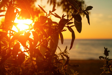 the rays of the setting sun through the leaves Shine on the background of the sea