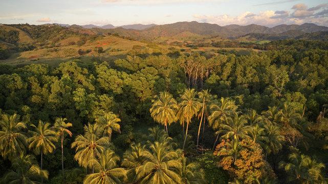 jungle aerial shot green trees