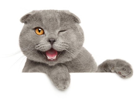 Winking grey cat above banner