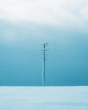 Frozen bare tree on snowy landscape against sky