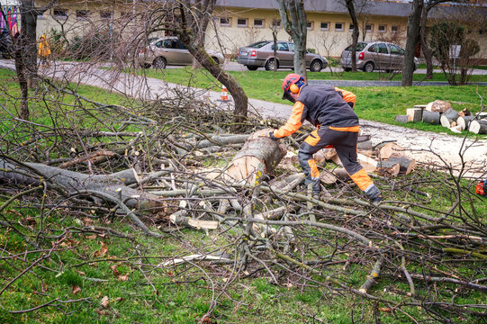 Man in overall and safety helmet cuts tree trunk by chainsaw among block of flasts