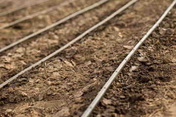 Use of drip irrigation in arid southern regions