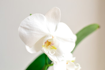 Beautiful orchid on a white background. Floral elegant background.