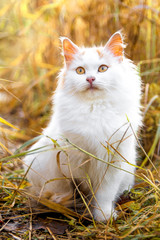 White cat sit on the grass